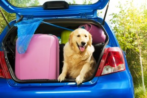 Close shoot of a dog and bags and other luggage in the trunk of the car on the back yard ready to go for vacation