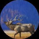 Joe Davidson Avatar
